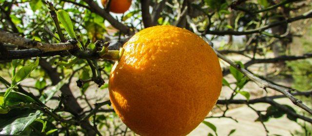 Le jardin fruitier d'Andros aux Tuileries